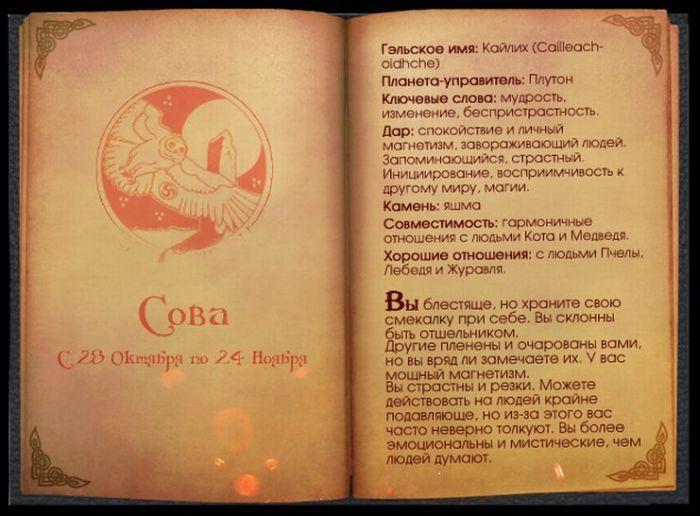 12 Гороскоп Кельтов Сова