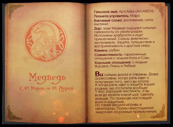 4 Гороскоп Кельтов Медведь